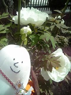ぶーちゃんとお花